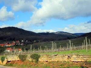 la Route des Vins d'Alsace4
